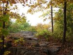 Autumn Forest Landscape 03 by FantasyStock