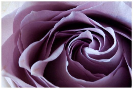 Roses can be dark by Dream--Catcher