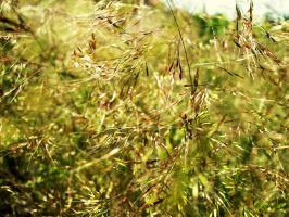 Grass in the sun by Zsurzsi