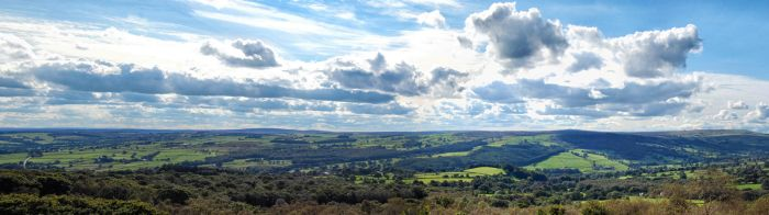Green Yorkshire by mandyleft