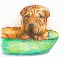 Dog in a Bowl by RoseLuna