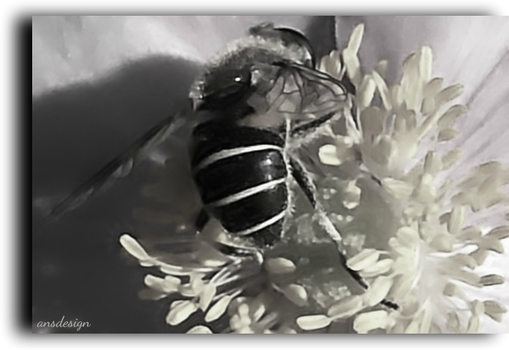 Honey to the bee... by ansdesign