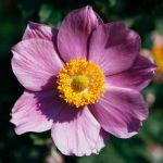 flower 188 by EphemeralMind